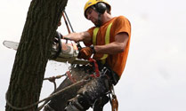 tricity tree services photo 1